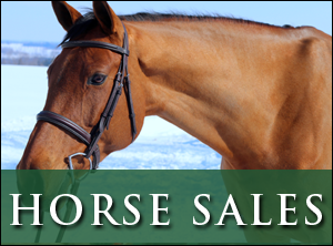 Hunter Jumper Horses for Sale at Stonewood Equestrian